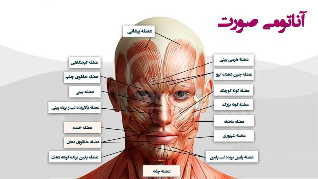آناتومی صورت - مایا بیوتی - عضلات صورت